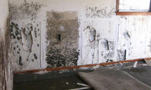 mold-services-1